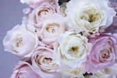 flower-1522260_1920